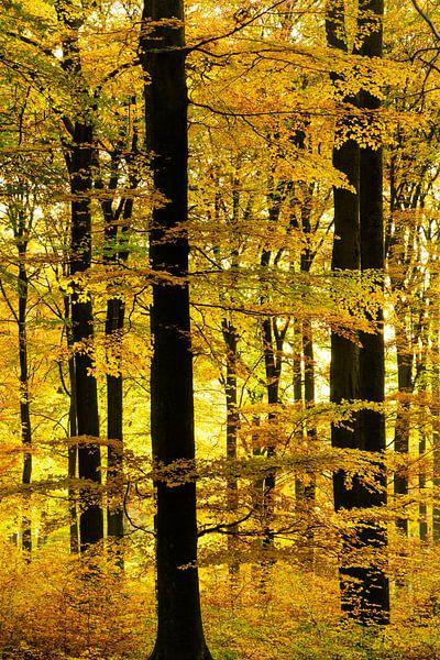 Zwart geel gestreept van Albert Lamme