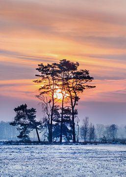 Winter scene met sneeuw bedekte wetland en kleurrijke sunrise_1 van Tony Vingerhoets
