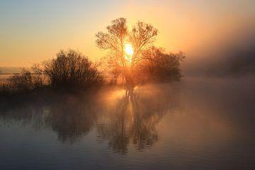 Sonne gegen Nebel von Bernhard Kaiser