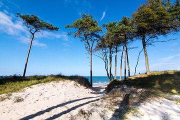 Ostsee - Weststrand auf dem Darß von Reiner Würz / RWFotoArt