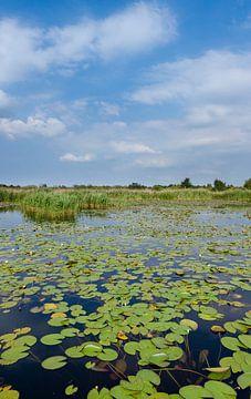 staand panorama van het Naardermeer, het eerste natuurgebied van Natuurmonumenten van