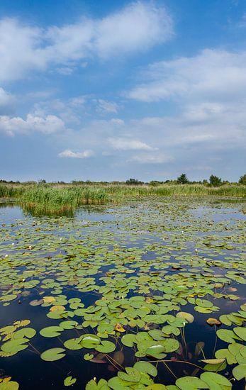 staand panorama van het Naardermeer, het eerste natuurgebied van Natuurmonumenten