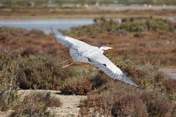 vogel von marijke servaes