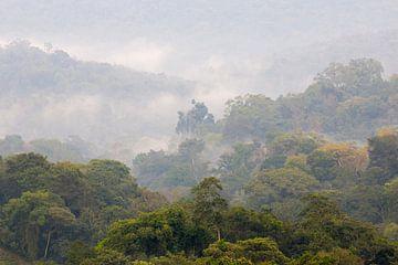 Kibale forest von Antwan Janssen