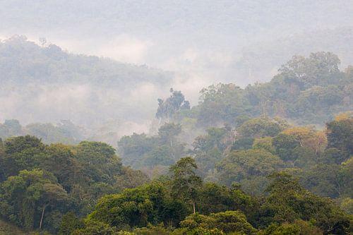 Kibale forest van Antwan Janssen