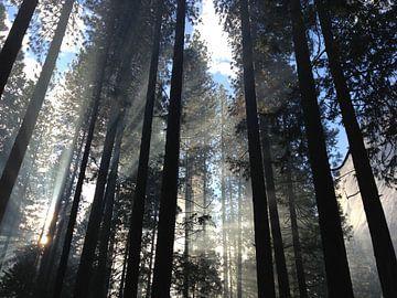 Yosemite Valley Forest van