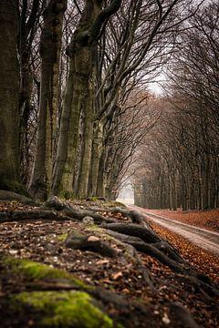 Sentier forestier sur Mayra Pama-Luiten