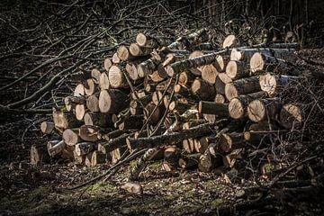 Omgezaagde bomen op een stapel van Kees van der Rest