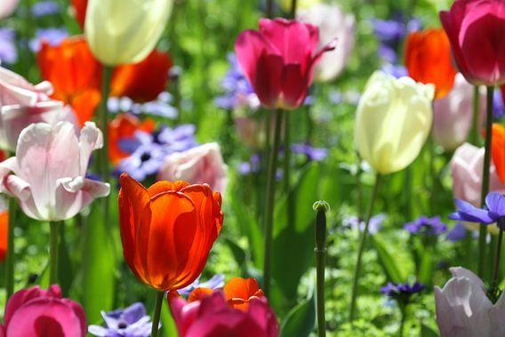 Tulpen in de Keukenhof (13) van Antwan Janssen