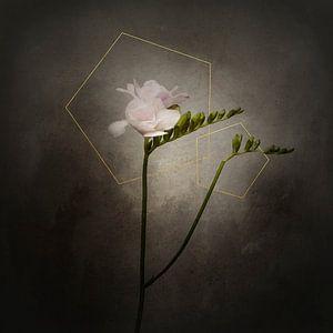 Grazile Blume - Die Freesie | Vintage-Stil gold