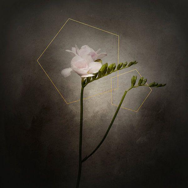 Grazile Blume - Die Freesie | Vintage-Stil gold von Melanie Viola