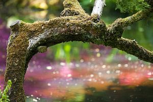 Boomstronk met mos
