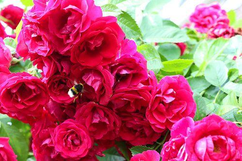 rozen met hommel