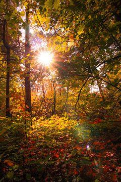 Herfst in het bos van Sjors Gijsbers