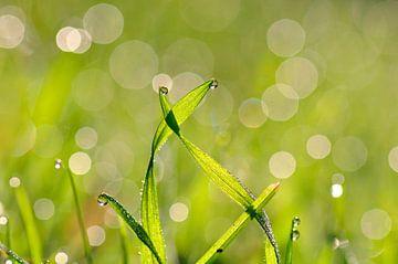 Dansend gras van Corinne Welp
