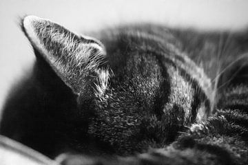 Schlafende Katze von Kees Winsemius