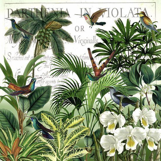Thuisbasis van de kolibries 2