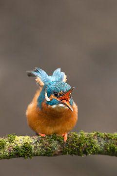 Eisvogel, der im Wurf fotografiert wurde. von Jeroen Stel