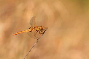 Libel Madagaskar