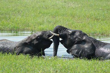 spelende olifanten in Okavango delta van Marieke Funke