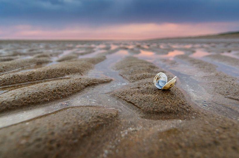 Sea Shells Sanctuary van Martijn van der Nat