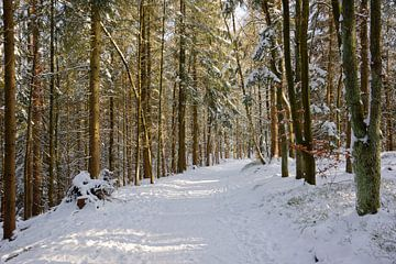 Door het winterbos van Gisela Scheffbuch