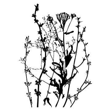 Botanische illustratie met planten, wilde bloemen en grassen 3.  Zwart wit.