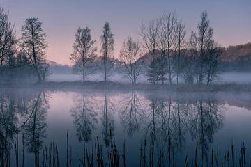 Spiegelung am Morgen von Ronny Rohloff