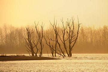 Zonsopkomst in natuurgebied de Biesbosch met zicht op dode bomen van Gonnie van de Schans