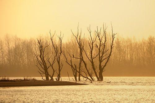 Zonsopkomst in natuurgebied de Biesbosch met zicht op dode bomen van