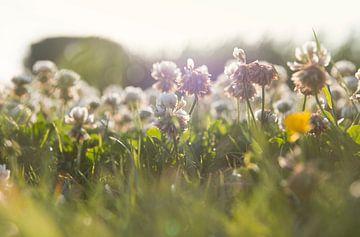 Blumen in der Abendsonne von Monique de Koning