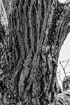 alter Baum von W.Schriebl PixelArts