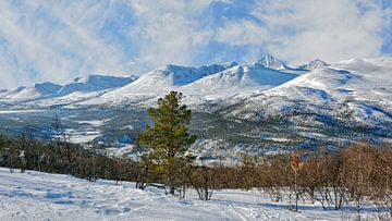 Norwegen, Rondane van Michael Schreier
