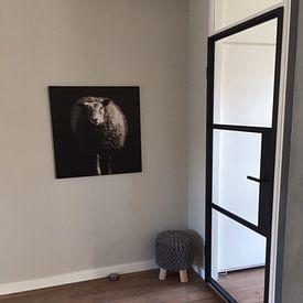 Photo de nos clients: Mouton sur Ines van Megen-Thijssen