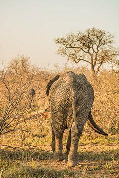 De kont van een olifant in Zuid-Afrika van Lizanne van Spanje