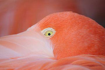 Portet van een Flamingo van Michel de Beer