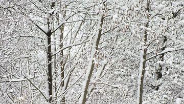 Schnee und Eis  von RD Foto's