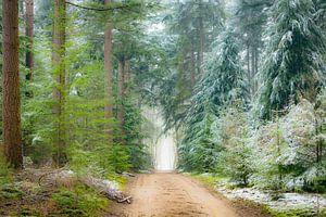 Weg door dennenbomen in het Speulderbos tijdens een mistige winterochtend van