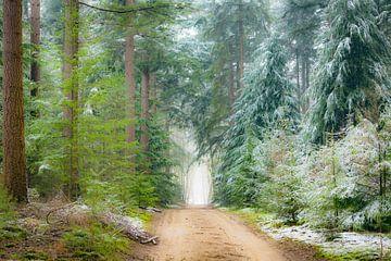 Weg durch Kiefern im Speulderbos- Wald im Veluwe-Naturreservat von Sjoerd van der Wal