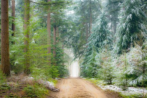 Weg door dennenbomen in het Speulderbos tijdens een mistige winterochtend