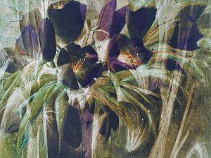 zwarte tulpen - samenvatting