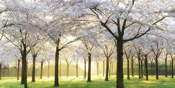 Bridal Trees van Lars van de Goor