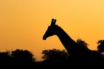Scherenschnitt-Giraffe Afrika von John Stijnman