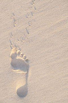 Voetafdruk in het Zand van Stephan Van Reisen