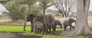 Elefanten im Schatten von Russell Hinckley