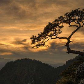 Sokolica sunset van Wojciech Kruczynski