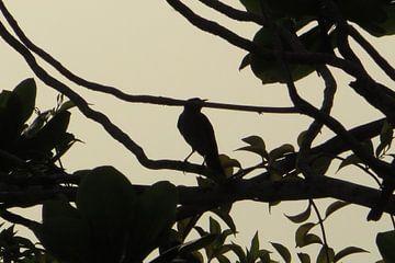 Early Bird 2 - Suriname van Hans Koreman