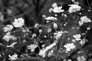 Weiße Blumen in Blüte von Sabine Bouwmeester