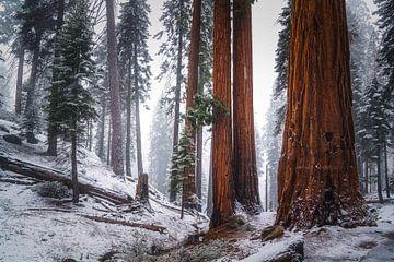 Bevroren in de tijd van Joris Pannemans - Loris Photography