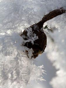 Winterse rozenbottel van